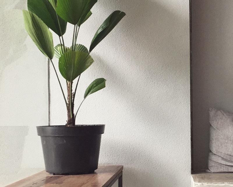flower pot black scanfill